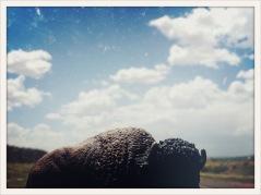 plastic buffalo / Van Horn, TX