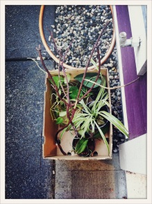 plants for free / thanks for the friendship