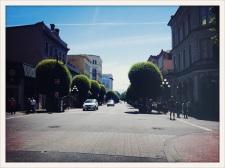 Victoria, BC / round trees