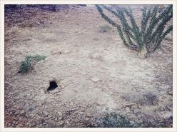 hole / Terlingua, TX