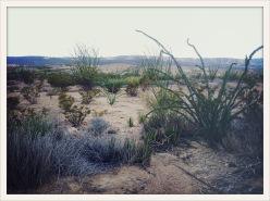 flora / Terlingua, TX
