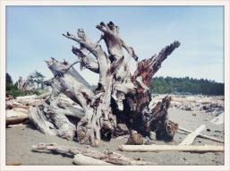 root / Forks, WA / May 31