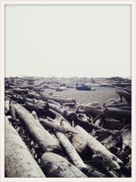 drift / Ruby Beach, WA / May 31