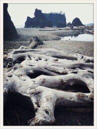 wood / Ruby Beach, WA / May 31