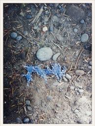 blue / tarp / Ruby Beach, WA / May 31