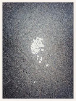 shells / Ocean Shores, WA / June 1