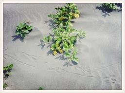 tracks / Ocean Shores, WA / June 1