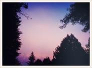 Trees of Mystery, CA