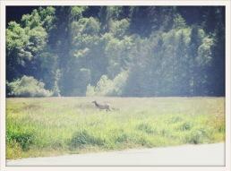 Elk / Prairie Creek, CA