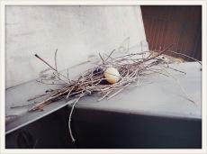 pigeon's nest
