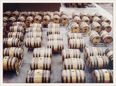 whiskey / Nevada